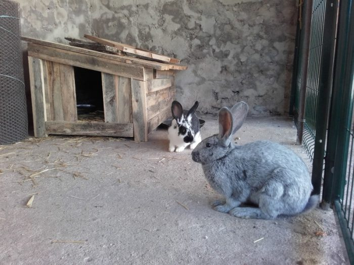 lapins-DDEC-Millau