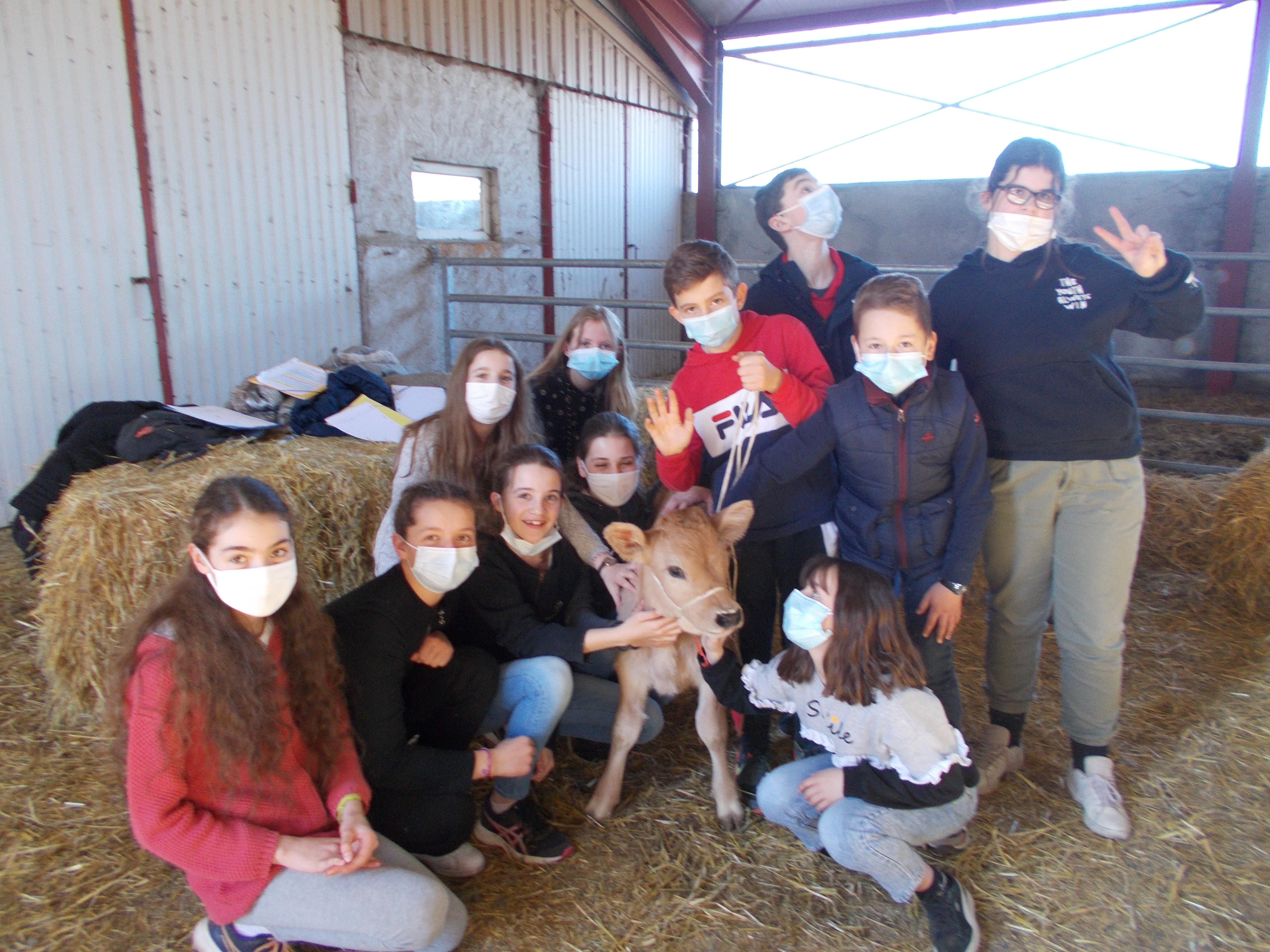 Laguiole - St Matthieu - Visite à la ferme - Mars 2021